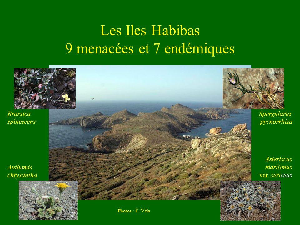 Les Iles Habibas 9 menacées et 7 endémiques