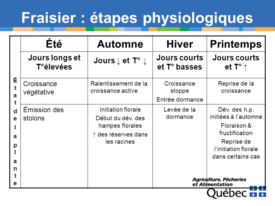 Fraisier : étapes physiologiques