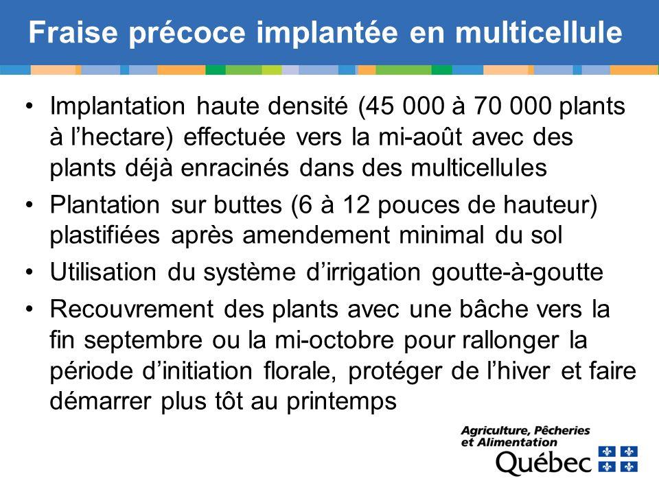 Fraise précoce implantée en multicellule