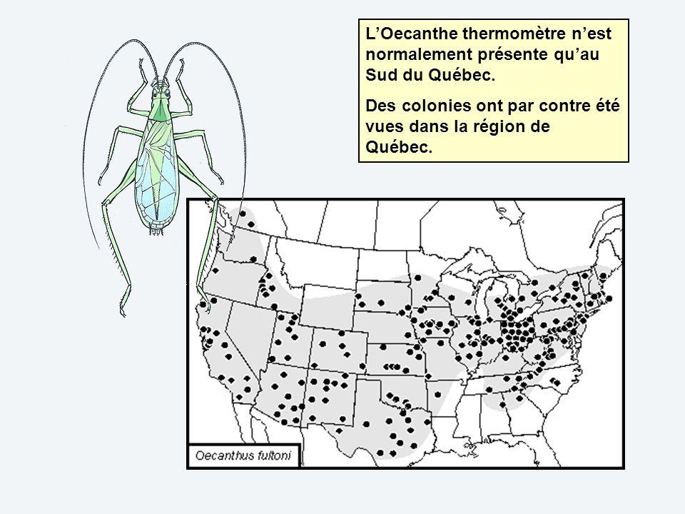 L'Oecanthe thermomètre n'est normalement présente qu'au Sud du Québec.