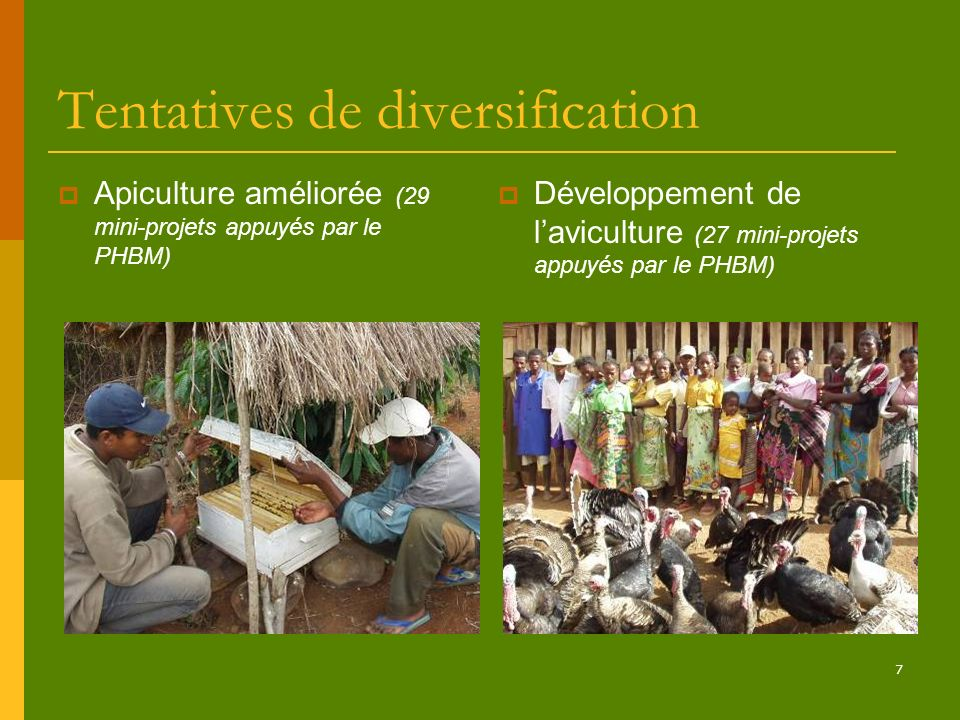 Tentatives de diversification