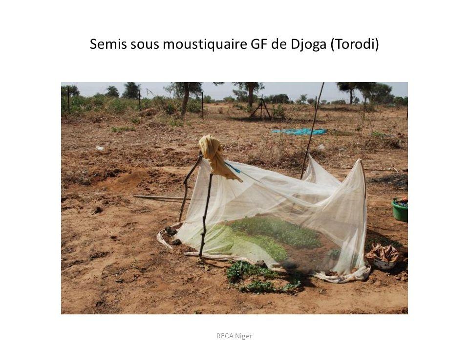 Semis sous moustiquaire GF de Djoga (Torodi)