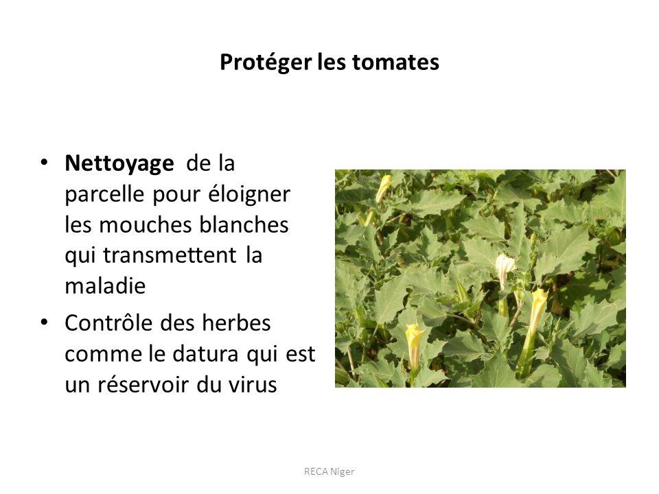 Contrôle des herbes comme le datura qui est un réservoir du virus