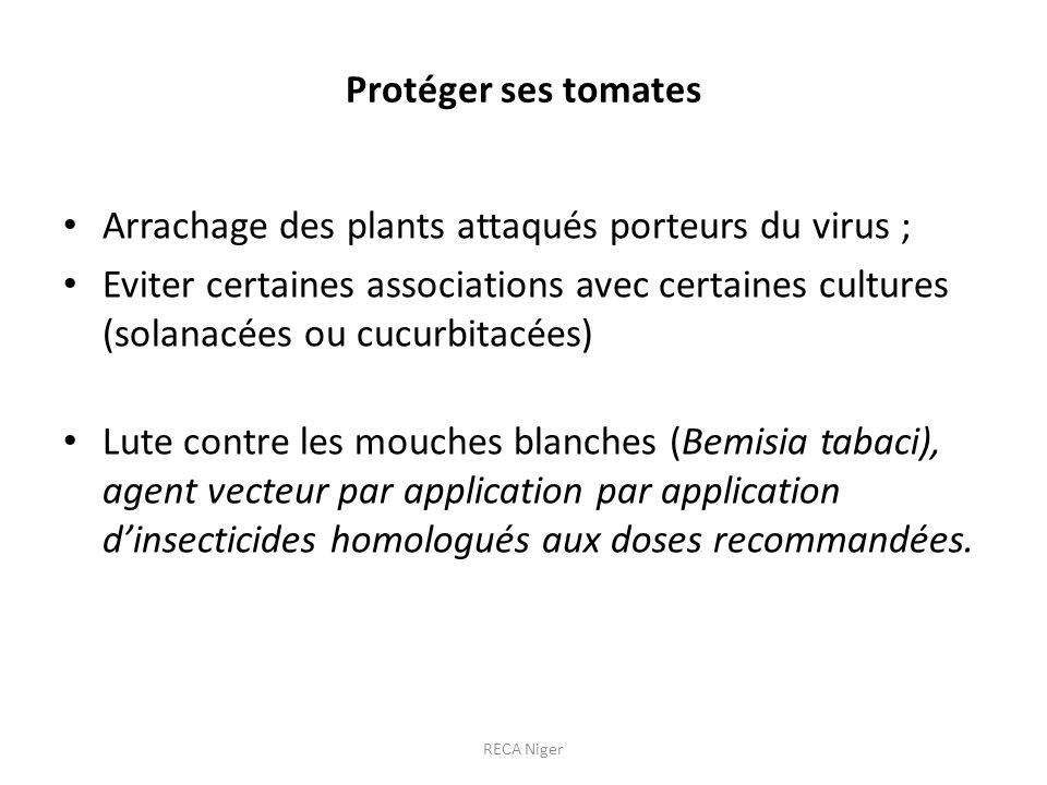 Arrachage des plants attaqués porteurs du virus ;
