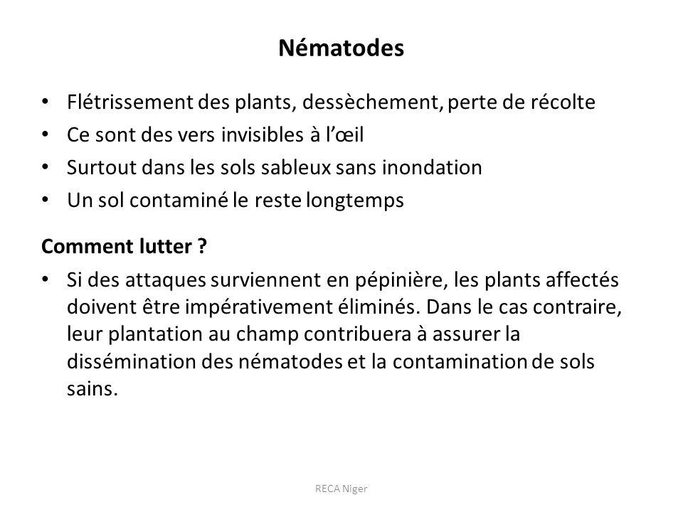 Nématodes Flétrissement des plants, dessèchement, perte de récolte