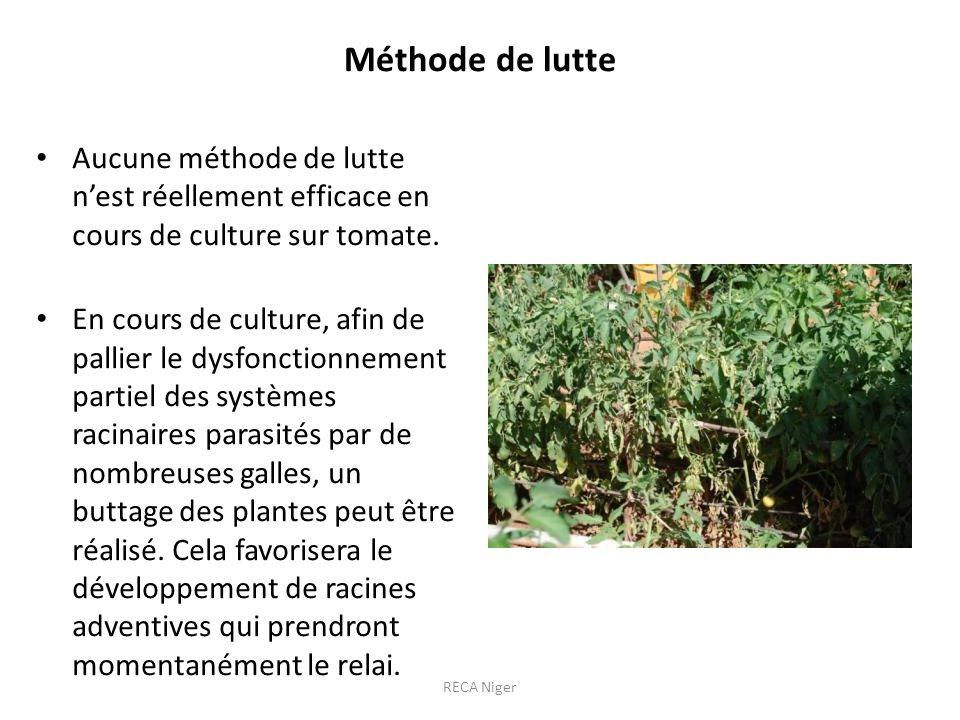 Méthode de lutte Aucune méthode de lutte n'est réellement efficace en cours de culture sur tomate.