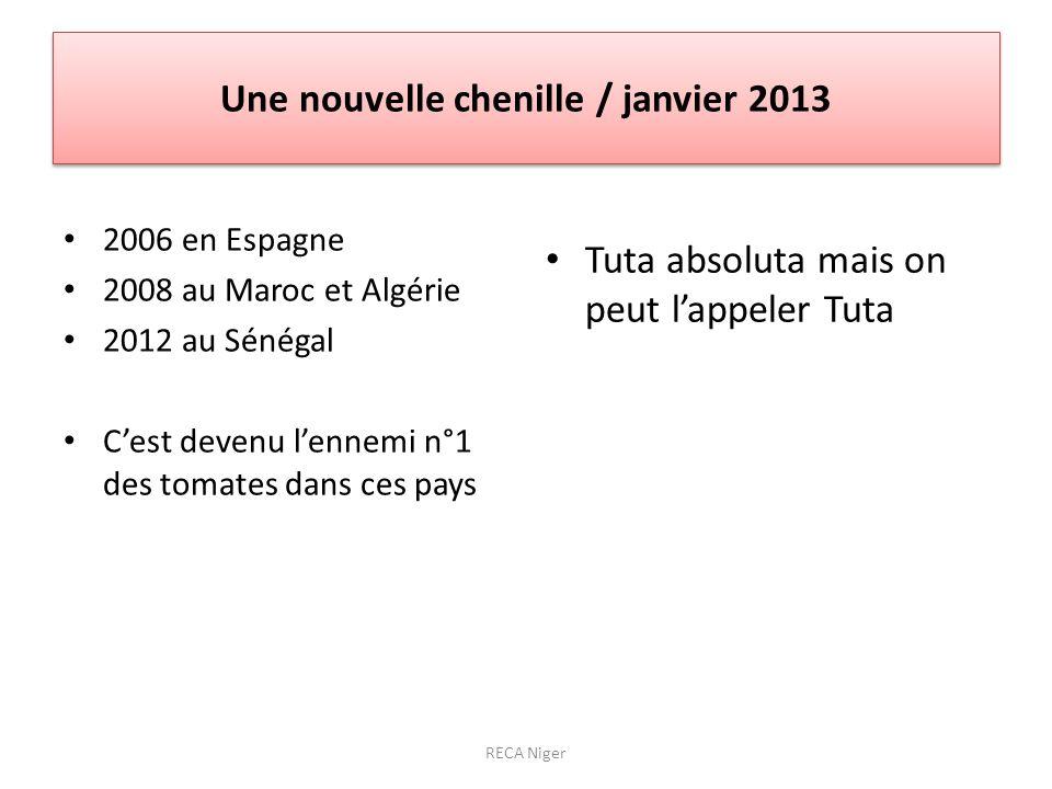 Une nouvelle chenille / janvier 2013