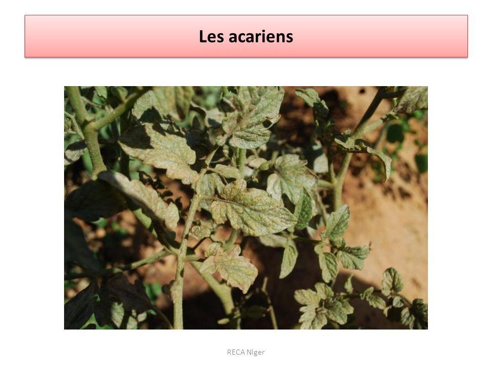 Les acariens RECA Niger