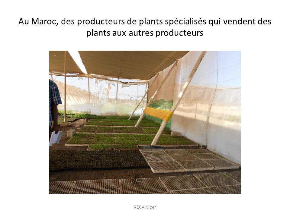 Au Maroc, des producteurs de plants spécialisés qui vendent des plants aux autres producteurs