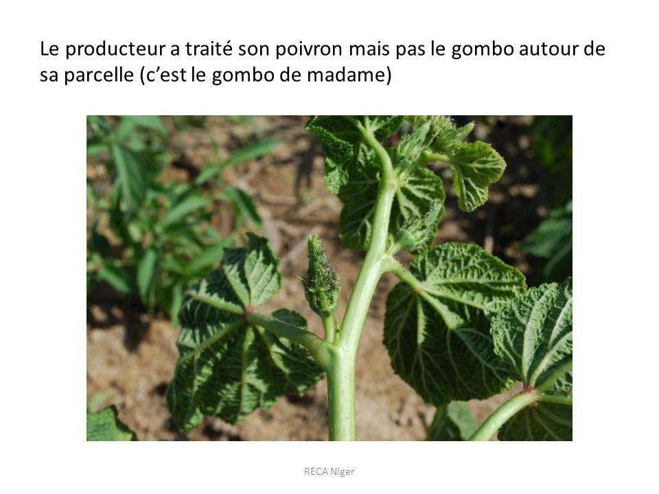 Le producteur a traité son poivron mais pas le gombo autour de sa parcelle (c'est le gombo de madame)