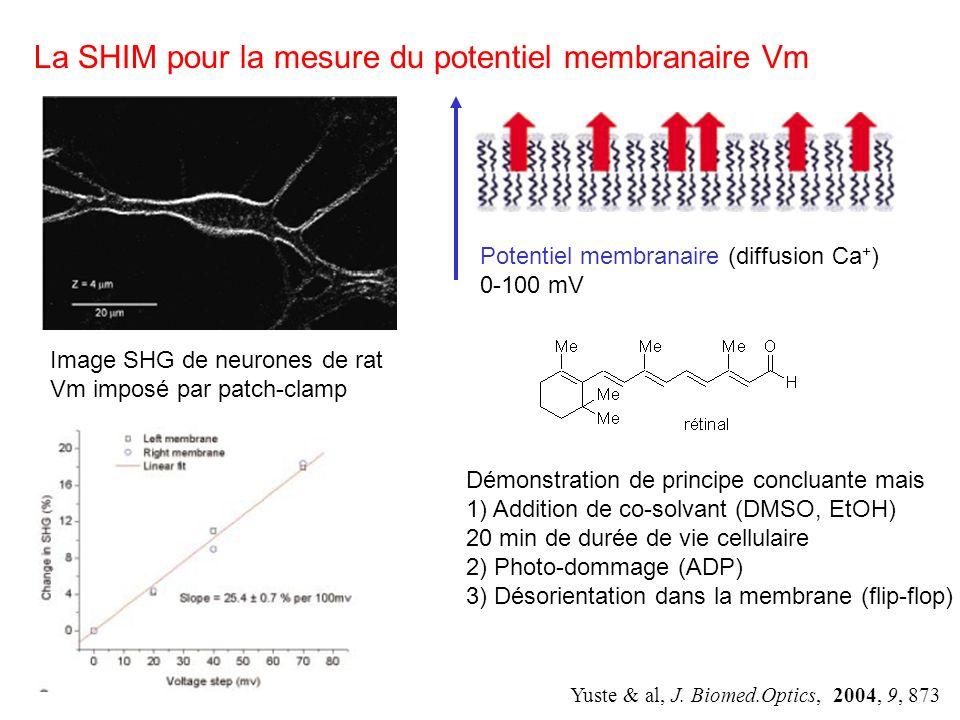 La SHIM pour la mesure du potentiel membranaire Vm