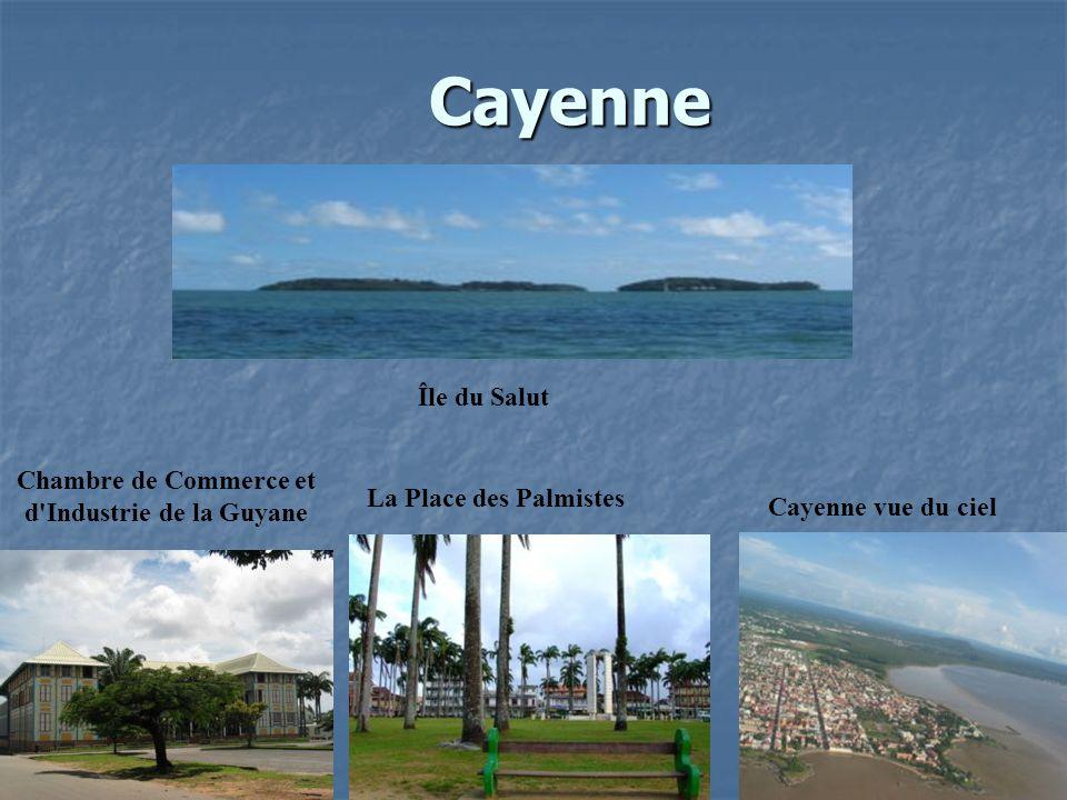 Chambre de Commerce et d Industrie de la Guyane