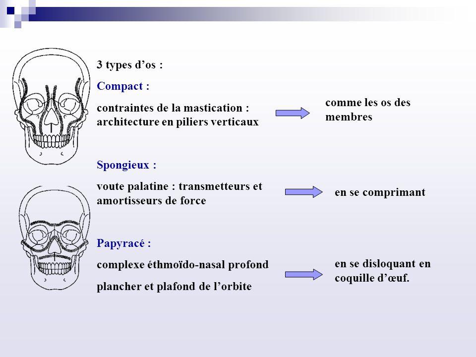 3 types d'os : Compact : contraintes de la mastication : architecture en piliers verticaux. Spongieux :