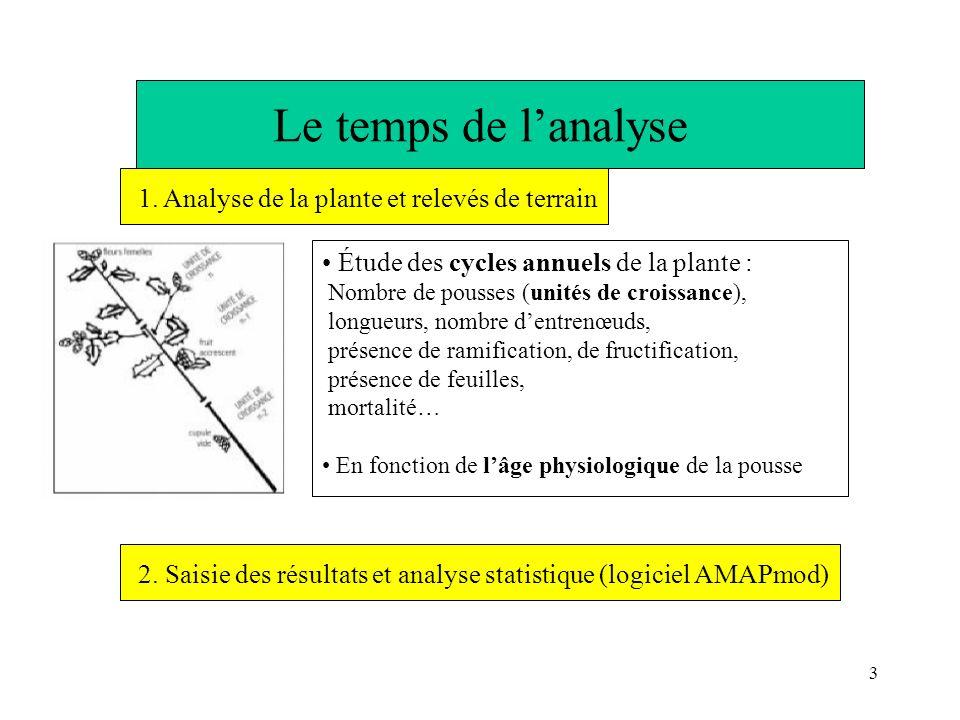 Le temps de l'analyse 1. Analyse de la plante et relevés de terrain