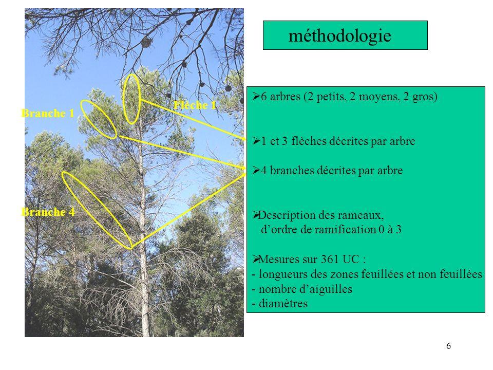 méthodologie 6 arbres (2 petits, 2 moyens, 2 gros) Flèche 1 Branche 1
