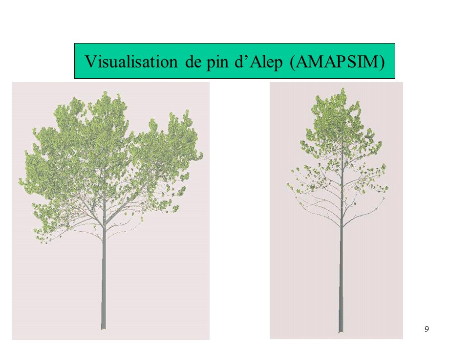 Visualisation de pin d'Alep (AMAPSIM)