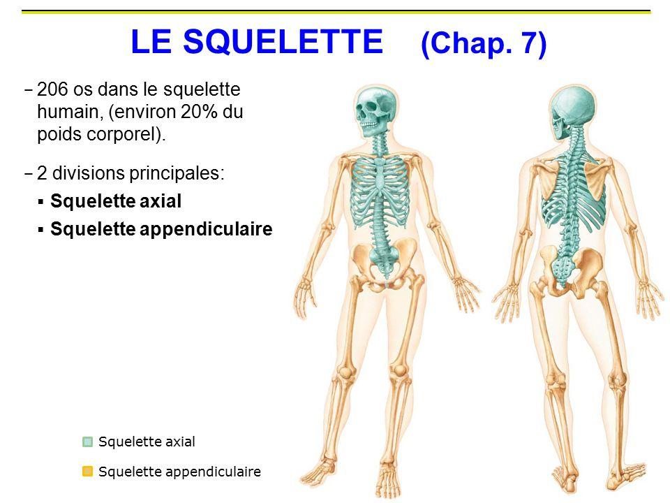 LE SQUELETTE (Chap. 7) 206 os dans le squelette humain, (environ 20% du poids corporel). 2 divisions principales: