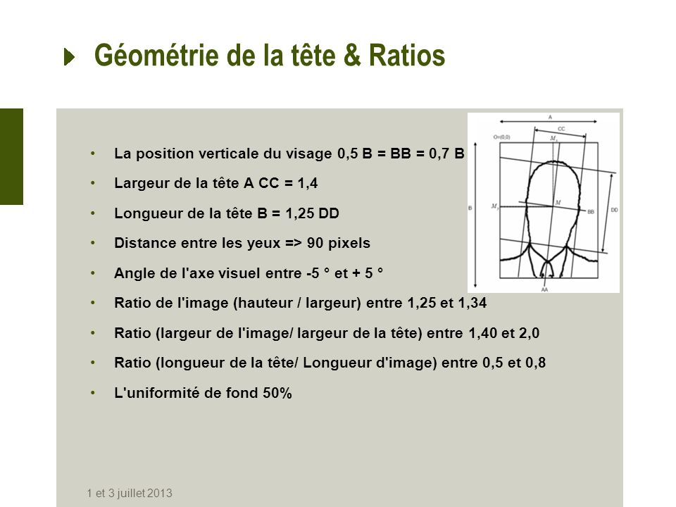 Géométrie de la tête & Ratios
