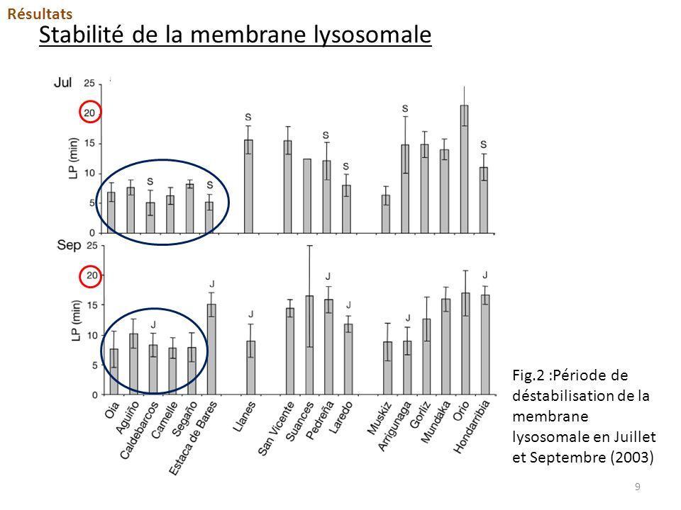 Stabilité de la membrane lysosomale