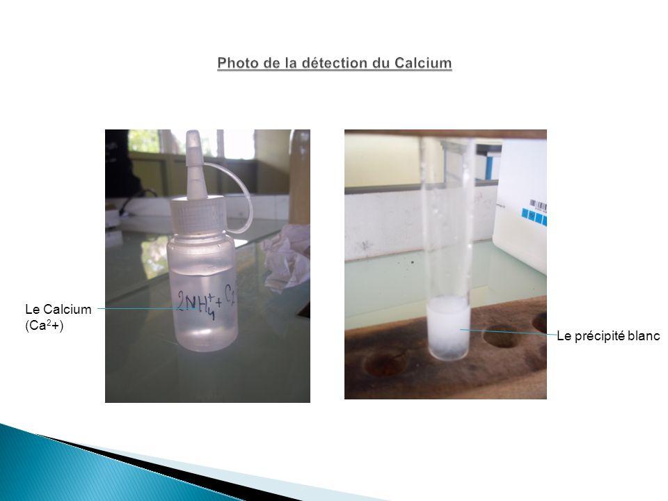 Photo de la détection du Calcium