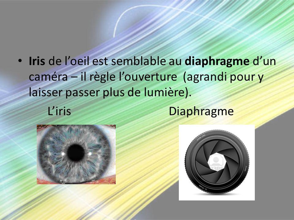 Iris de l'oeil est semblable au diaphragme d'un caméra – il règle l'ouverture (agrandi pour y laisser passer plus de lumière).