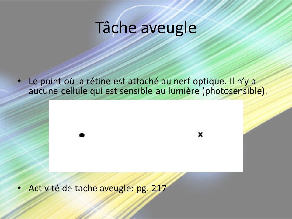 Tâche aveugle Le point où la rétine est attaché au nerf optique. Il n'y a aucune cellule qui est sensible au lumière (photosensible).