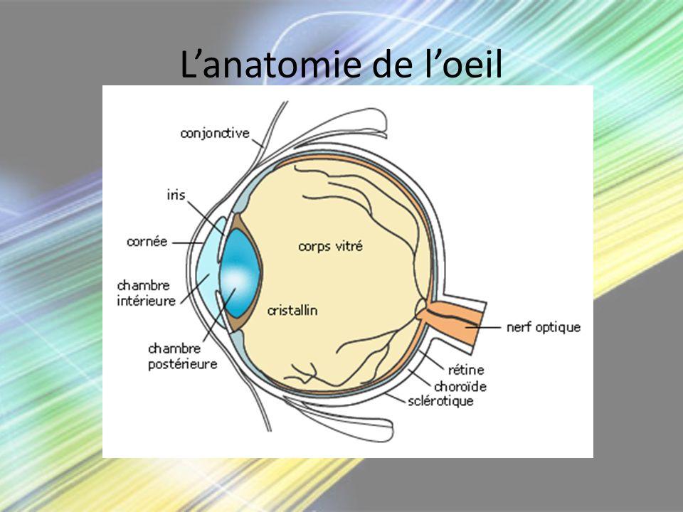 L'anatomie de l'oeil
