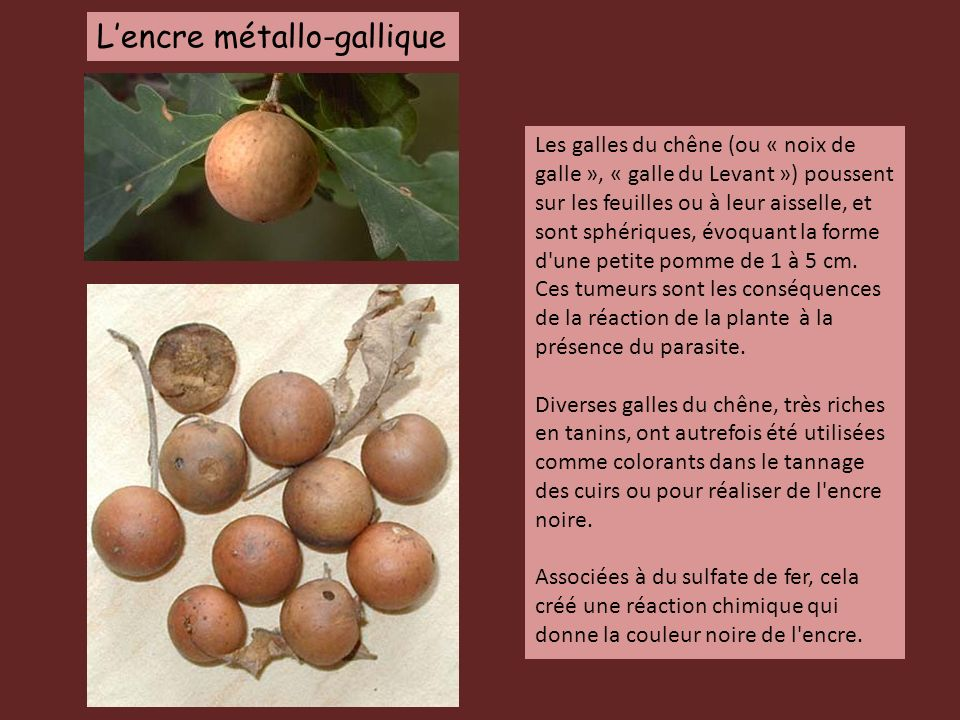 L'encre métallo-gallique