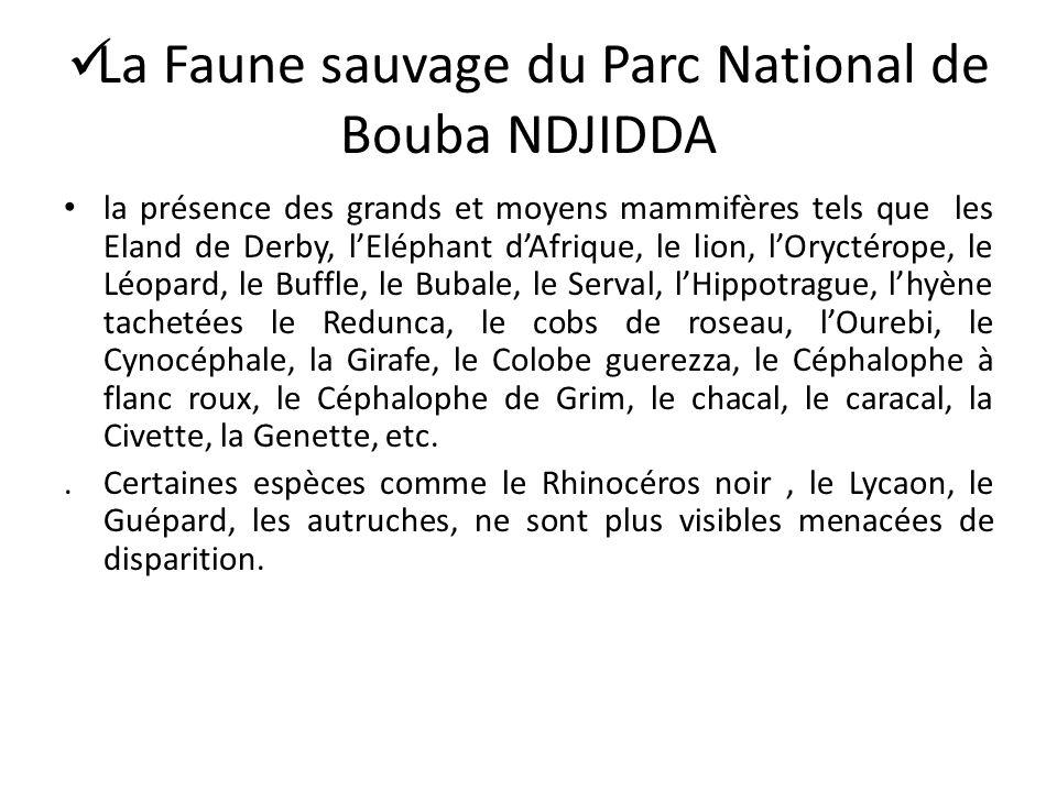 La Faune sauvage du Parc National de Bouba NDJIDDA
