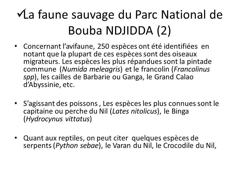 La faune sauvage du Parc National de Bouba NDJIDDA (2)