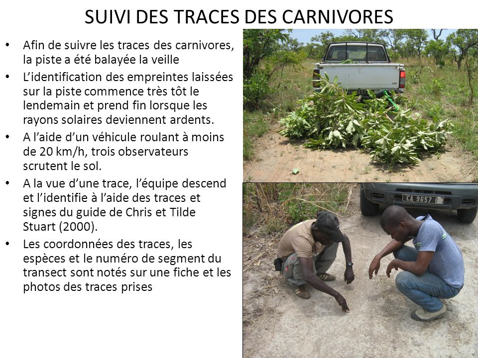 SUIVI DES TRACES DES CARNIVORES