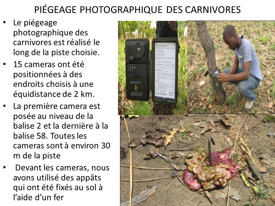PIÉGEAGE PHOTOGRAPHIQUE DES CARNIVORES