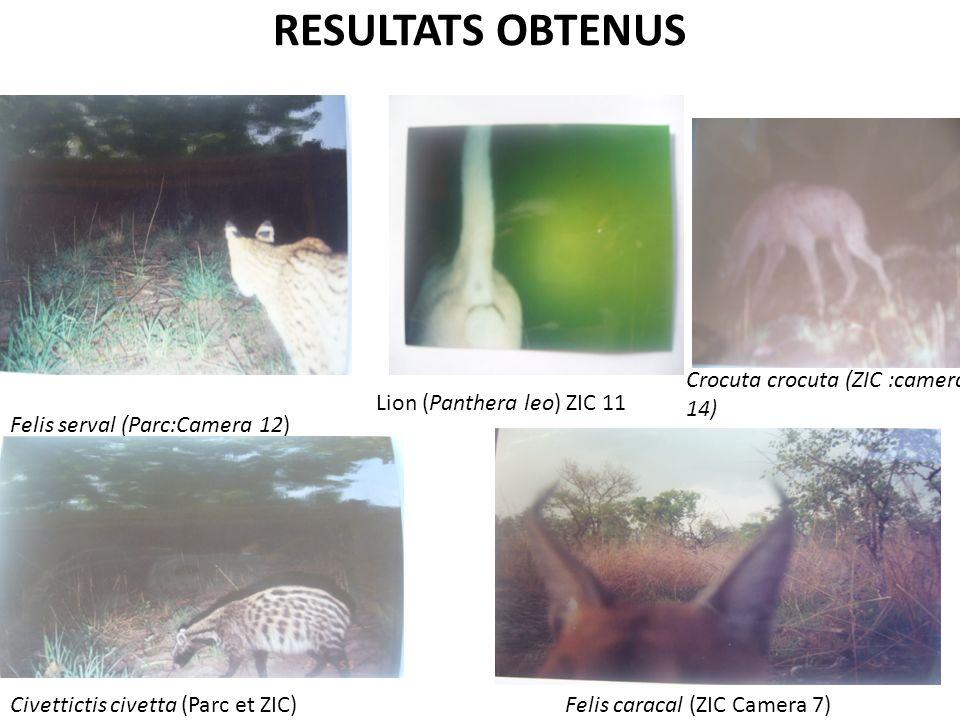 RESULTATS OBTENUS Crocuta crocuta (ZIC :camera 14)