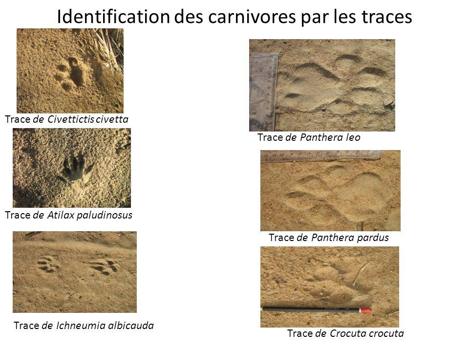 Identification des carnivores par les traces