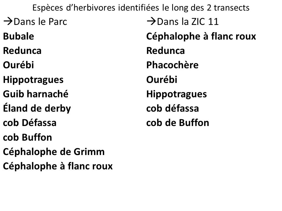 Espèces d'herbivores identifiées le long des 2 transects