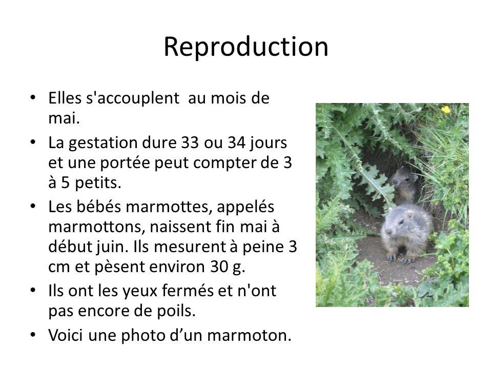 Reproduction Elles s accouplent au mois de mai.