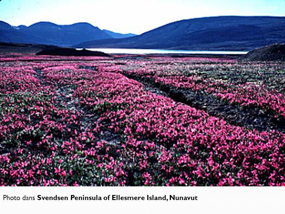 Photo dans Svendsen Peninsula of Ellesmere Island, Nunavut