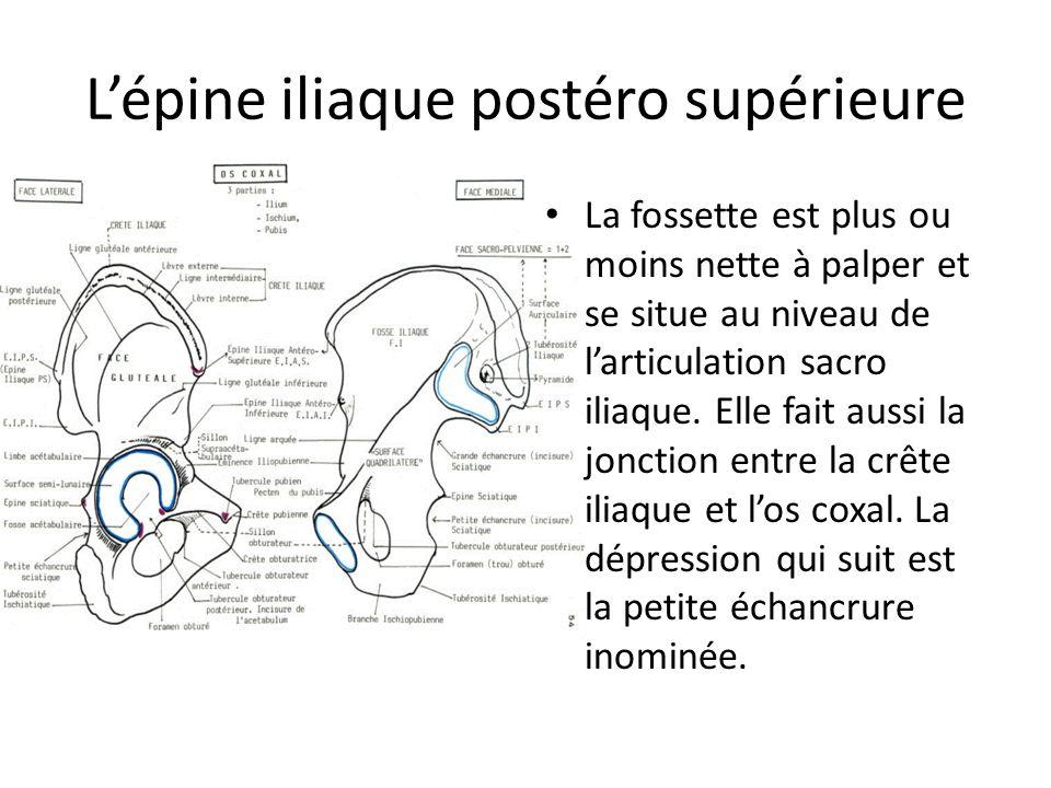 L'épine iliaque postéro supérieure