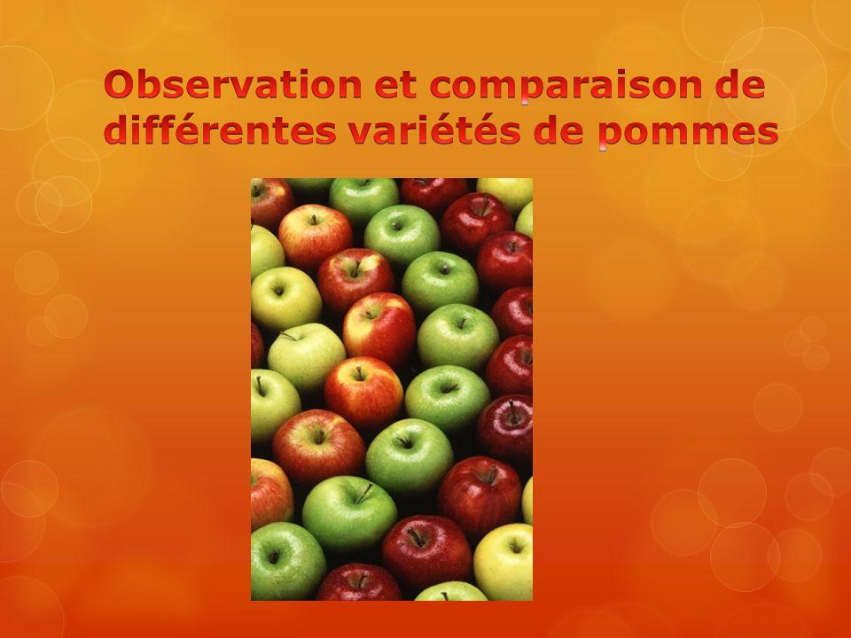 Observation et comparaison de différentes variétés de pommes