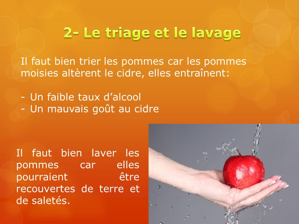 2- Le triage et le lavage Il faut bien trier les pommes car les pommes moisies altèrent le cidre, elles entraînent:
