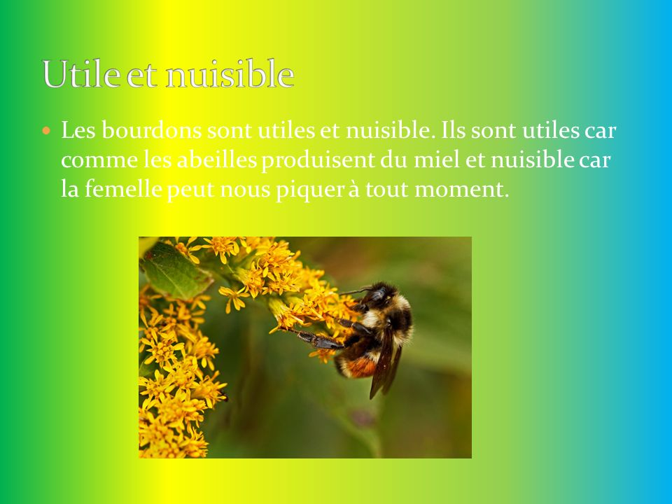 Utile et nuisible