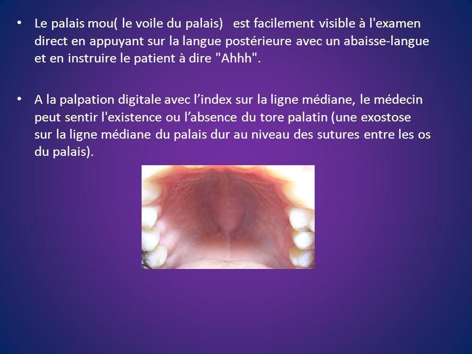 Le palais mou( le voile du palais) est facilement visible à l examen direct en appuyant sur la langue postérieure avec un abaisse-langue et en instruire le patient à dire Ahhh .