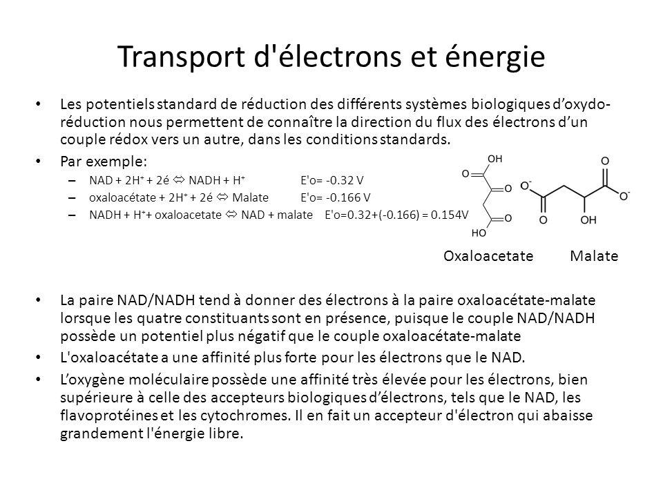 Transport d électrons et énergie