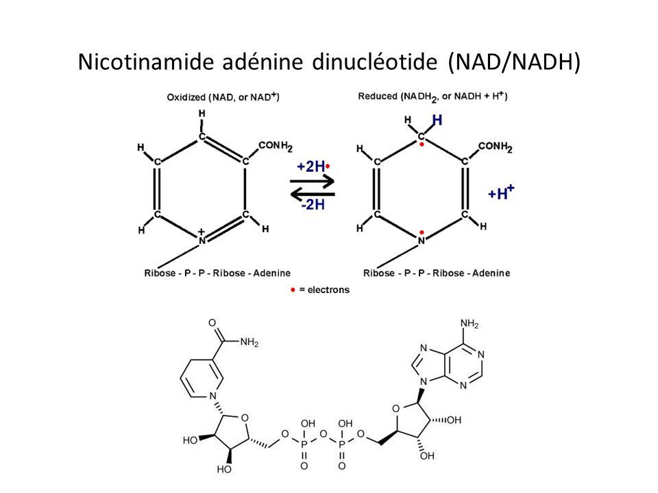 Nicotinamide adénine dinucléotide (NAD/NADH)