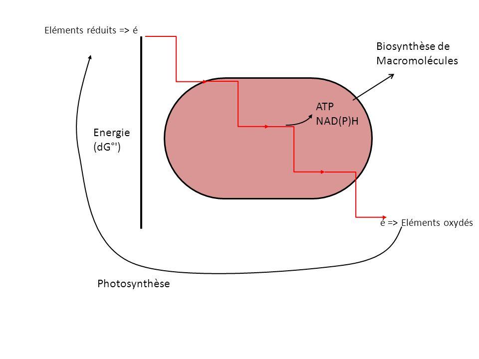 Biosynthèse de Macromolécules ATP NAD(P)H Energie (dG° ) Photosynthèse