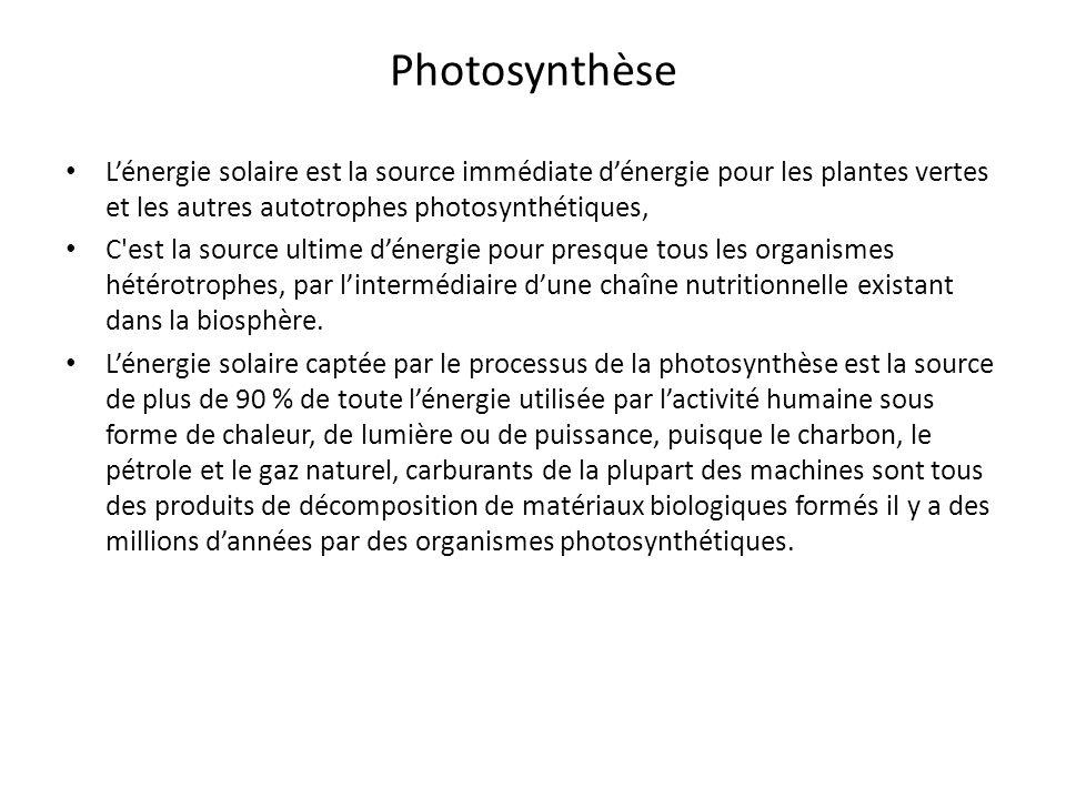 PhotosynthèseL'énergie solaire est la source immédiate d'énergie pour les plantes vertes et les autres autotrophes photosynthétiques,