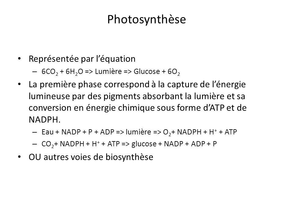 Photosynthèse Représentée par l'équation