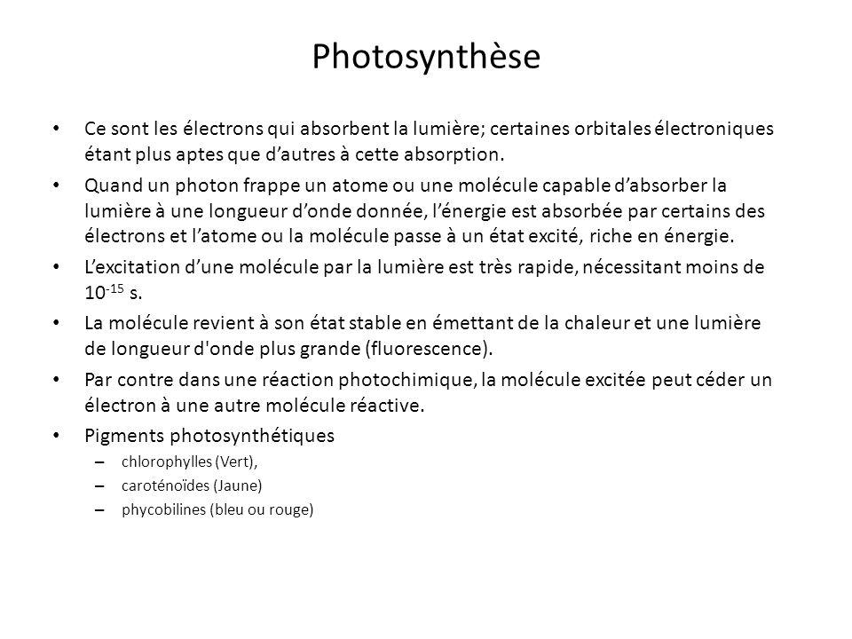 Photosynthèse Ce sont les électrons qui absorbent la lumière; certaines orbitales électroniques étant plus aptes que d'autres à cette absorption.