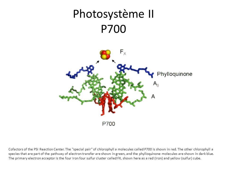 Photosystème II P700