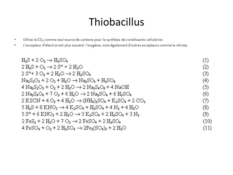 ThiobacillusUtilise le CO2 comme seul source de carbone pour la synthèse de constituants cellulaires.